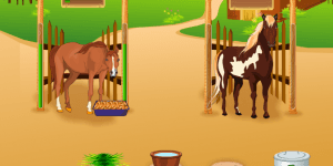Hra - Horsecare Apprenticeships