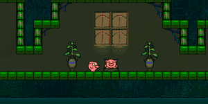 Pig Dream