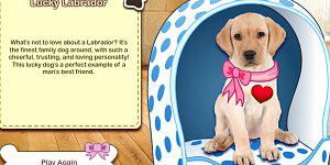 Hra - Můj psí kvíz