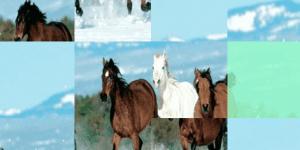 Running Horses Puzzle