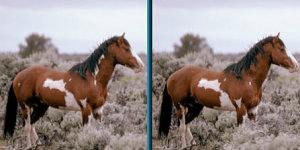 Spot Horse 2v1