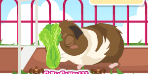 Guinea Pig Care