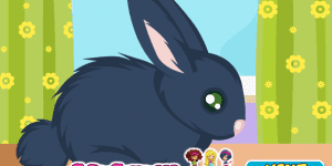 Hra - Rabbit Care
